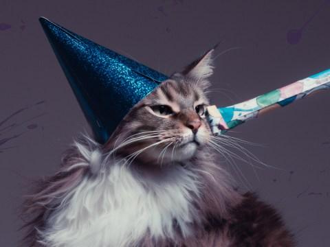 How felines celebrate International Cat Day