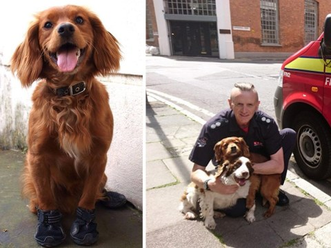 Very good firefighter dog who was sent into Grenfell Tower retires
