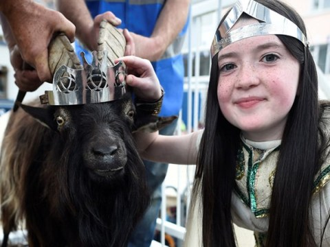 Goat crowned king of a small town in Ireland