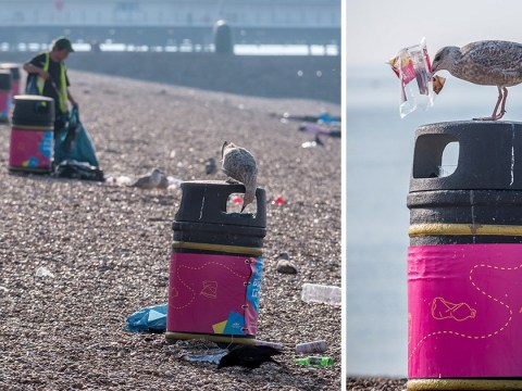 Brighton beach was so filthy that even seagulls were helping to clean up