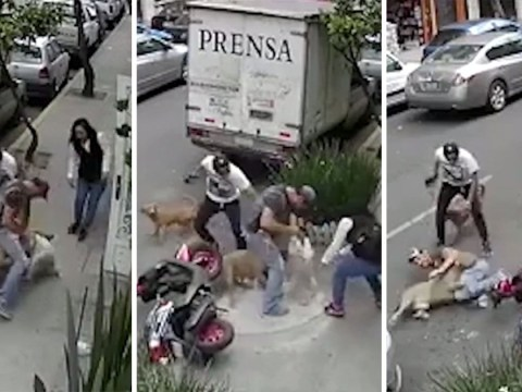 Man fights off angry pitbull to protect tiny Maltese terrier