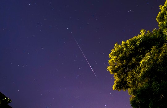 Meteor shower at night above a tree