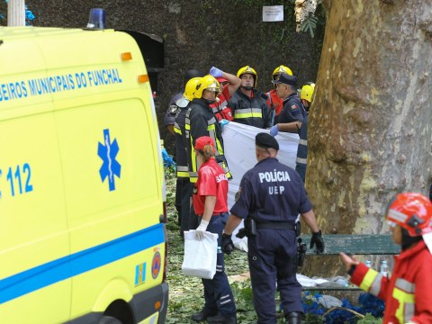 Falling tree kills 12 people during festival in Madeira