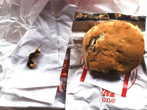 Decomposing rodent found in Chick-fil-A sandwich after woman spots whiskers