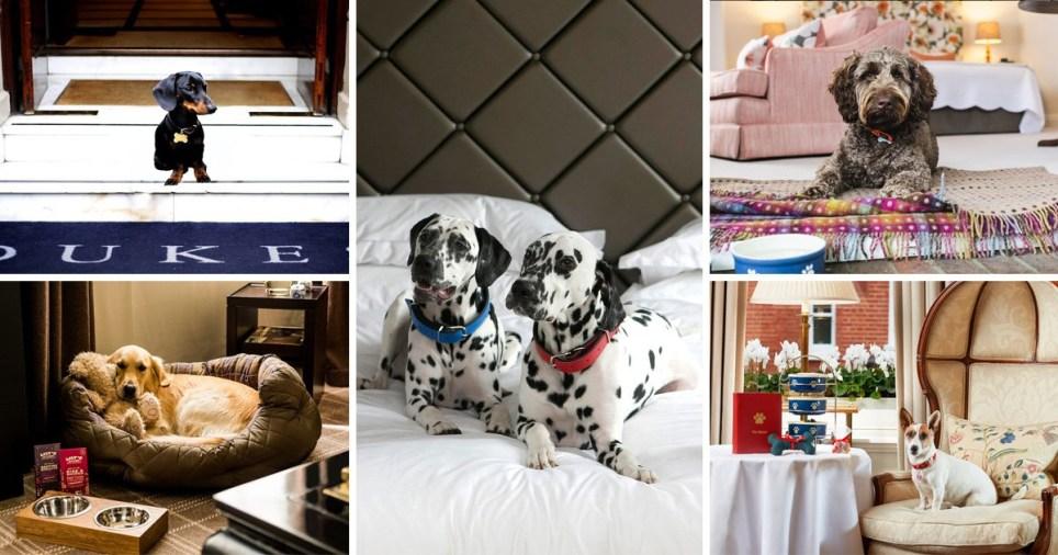 Dog hotels