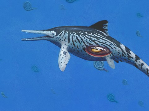 Remains of unborn baby found inside a 200,000,000-year-old sea reptile