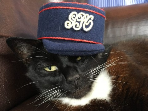 The Postal Museum want your cat to apply for their latest job