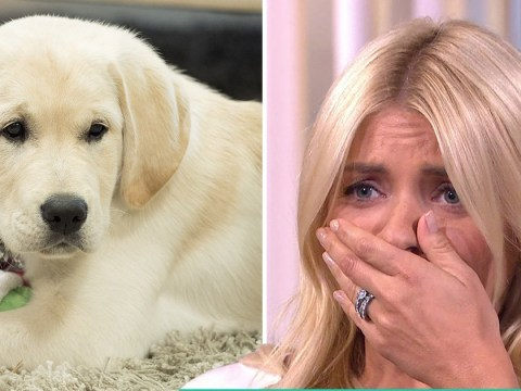 Holly Willoughby can't contain herself as Phillip Schofield brings out new This Morning puppy live on air
