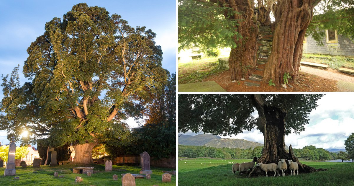 Tree Of The Year is a real competition, and here's the shortlist