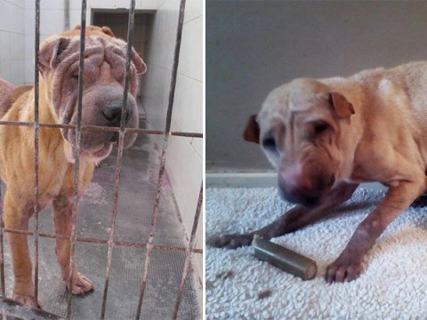 Shocking photos reveal awful mistreatment of dogs and their amazing transformation