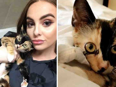 Flight attendant's desperate plea to bring the cat she saved from Hurricane Irma back to the UK