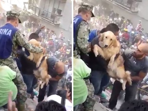 Hope as dog is pulled from rubble of deadly earthquake in Mexico
