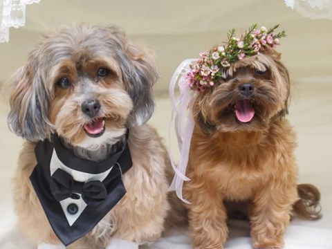Truffles and Coco tie the knot in a luxurious island themed wedding ceremony