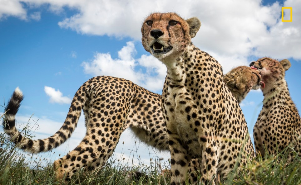 National Geographic's nature photographs of the year are breathtaking