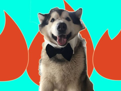 Meet Phil – the flirty dog with his own Tinder account