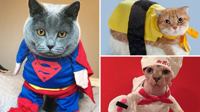 15 Halloween costumes that your cat might tolerate