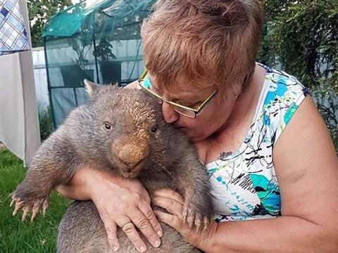Grandma Julie has spent thousands on saving wombats