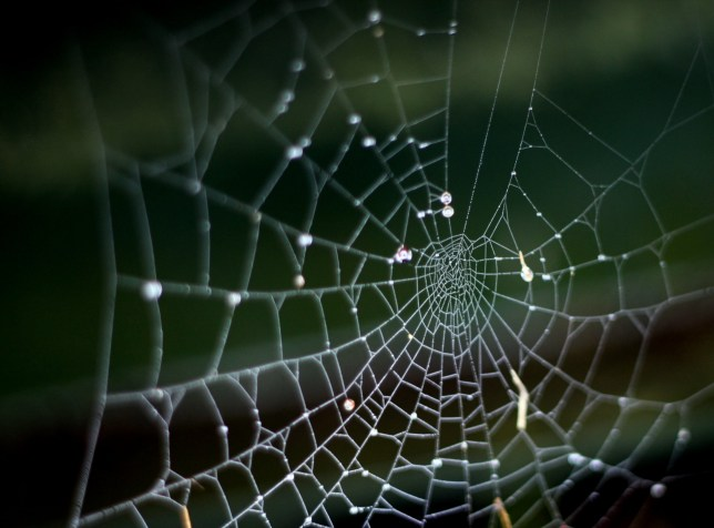 Ever wandered where spiders go in the winter?