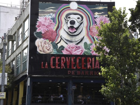Frida, the bravest rescue dog, has been immortalised in a mural