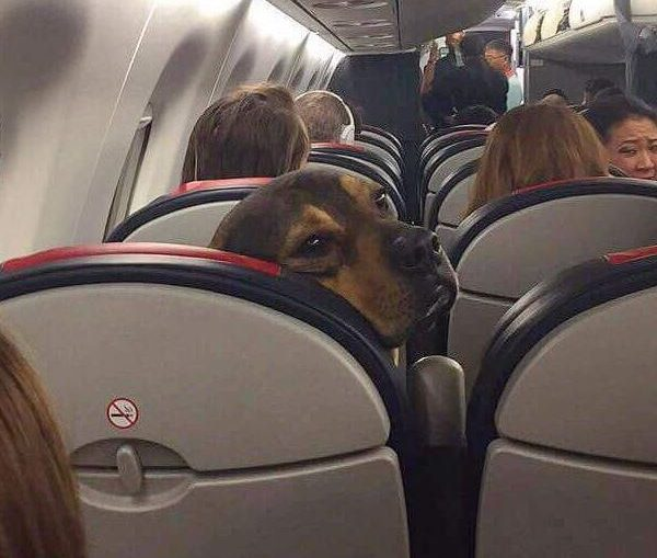 Someone brought a dog on a plane and people loved it