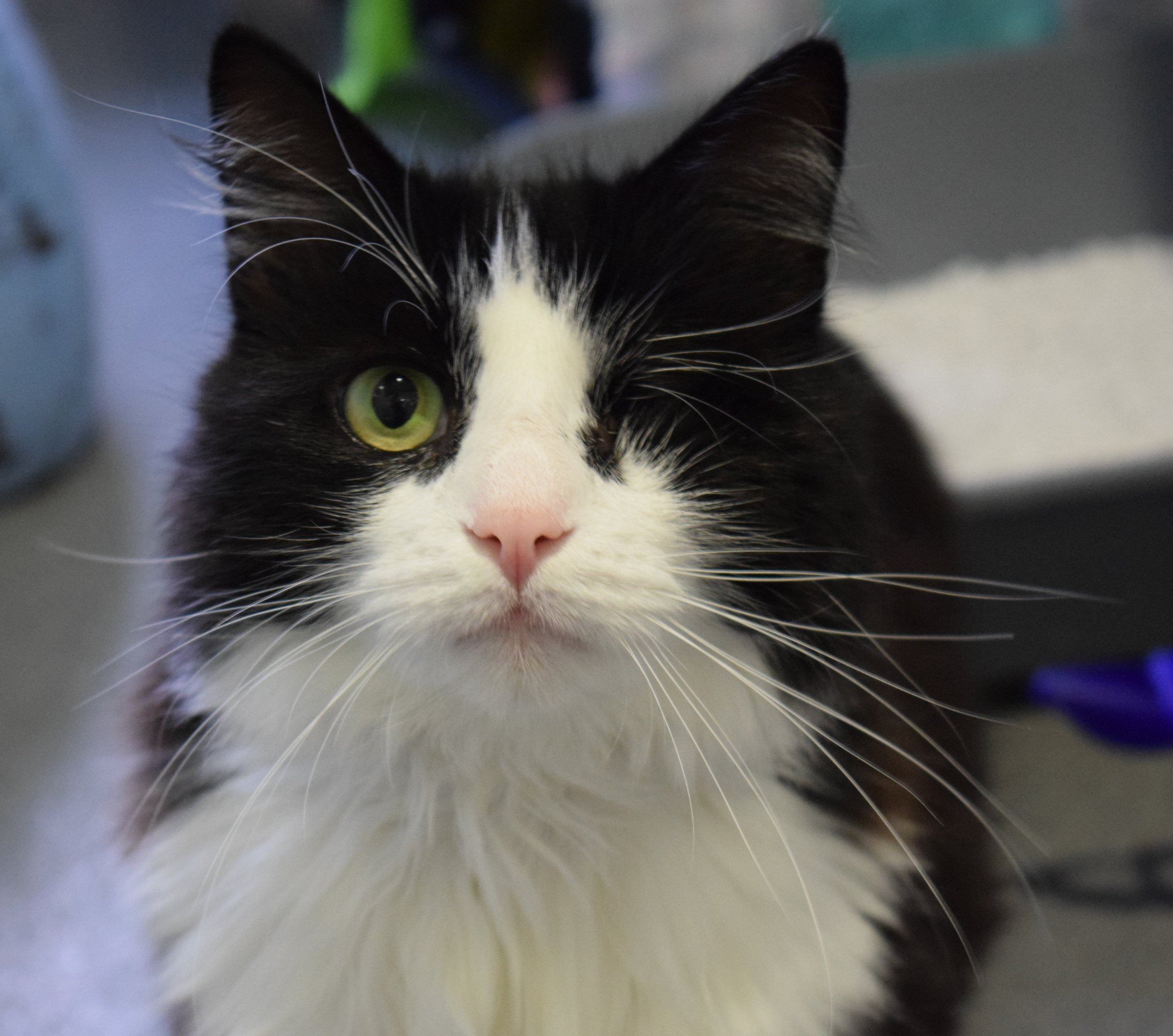 Battersea Dogs & Cats Home shares some of the most brilliantly named cats and dogs to come in to the shelter