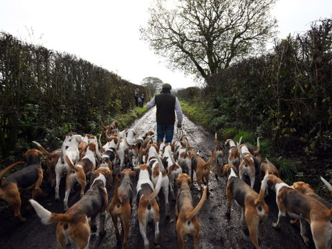 National Trust urges members not to back ban of legal trail hunting on its land