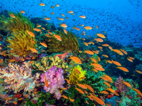BBC to release Blue Planet II in 4K on iPlayer