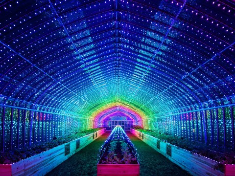 There's an amazing touch-activated LED greenhouse in Tokyo