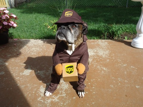 There's a Facebook group where UPS drivers share pics of very good dogs they meet on their travels