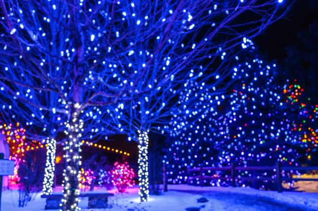 Where To See Christmas Lights.Where You Can See The Sparkliest Christmas Lights This Year