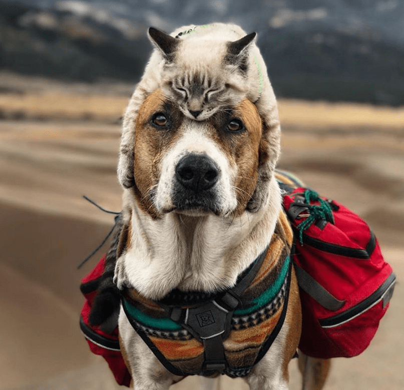 Cat and dog love travelling together and their photos are absolutely epic