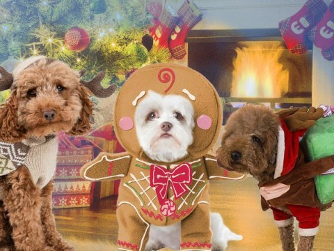 12 Christmas outfit ideas for the dog in your life