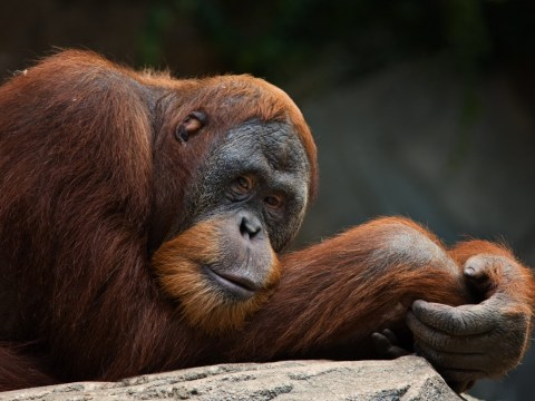 A really, really simple beginners guide to breaking up with palm oil