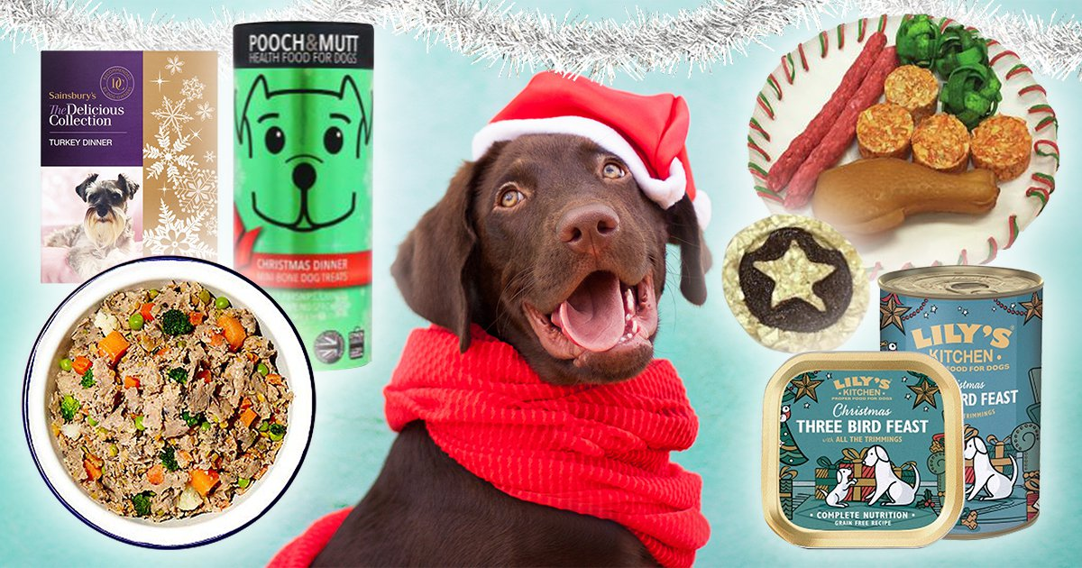 The ultimate guide to Christmas dinner for your dog