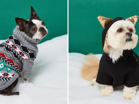 River Island's new RI Dog collection will make you squee