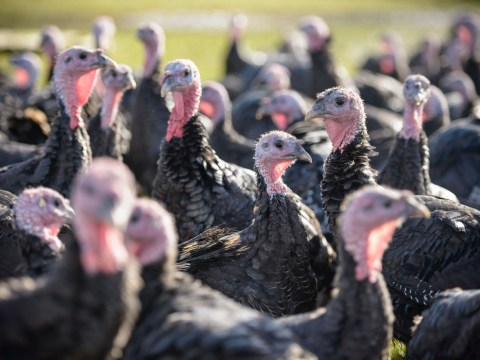 9 things you only know if you're a turkey farmer