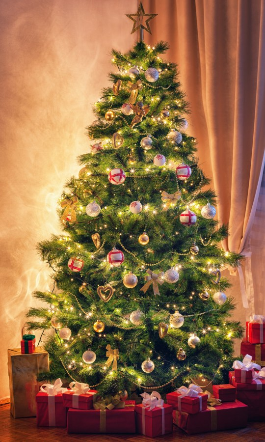 Christmas Trees Images.Why Do We Have Christmas Trees In Our Homes And When Do You