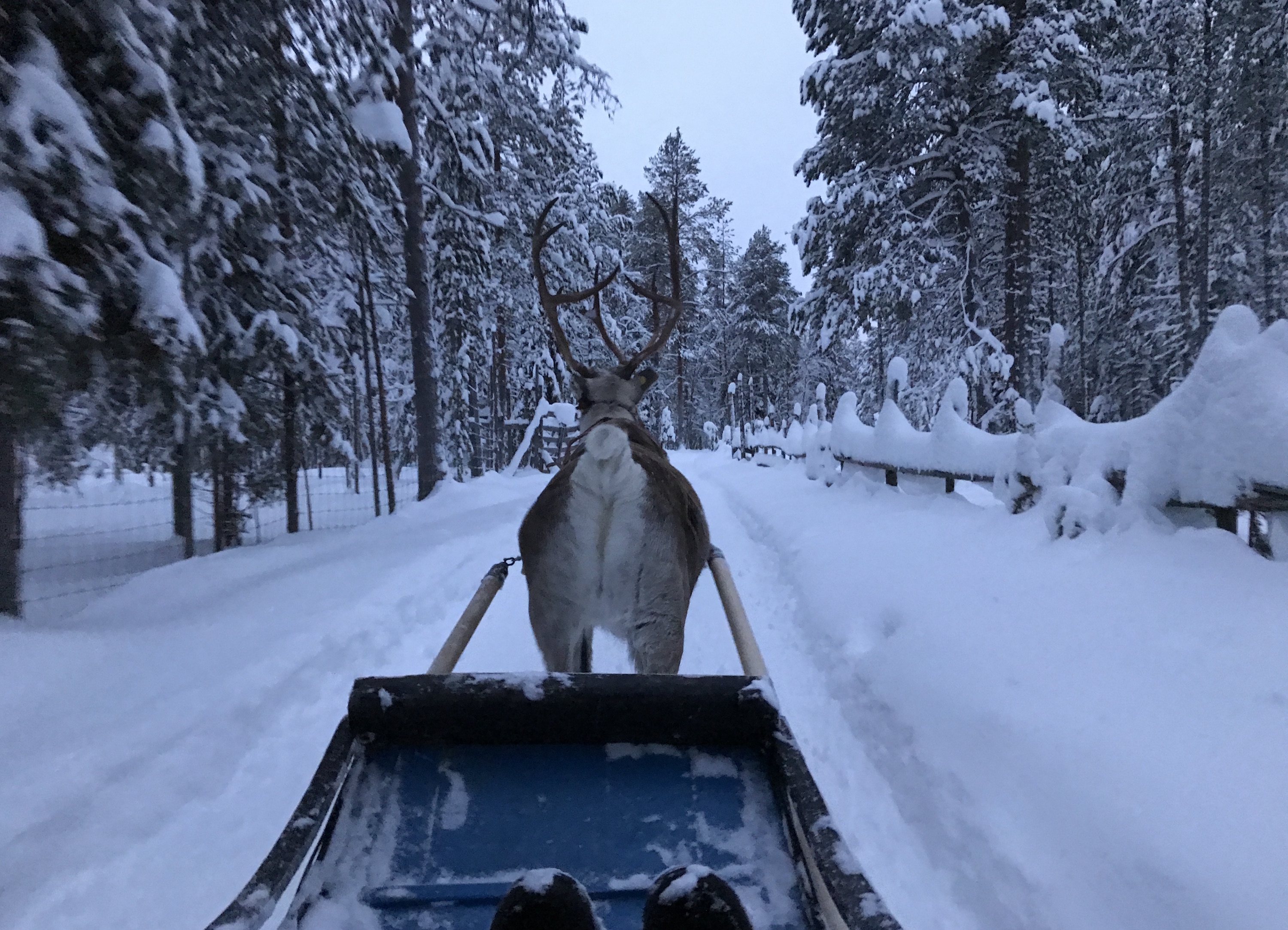 White Christmas and New Year – why Finnish Lapland should be your next break