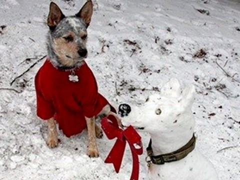 People have been making snowman versions of their pets and it's as good as you're imagining