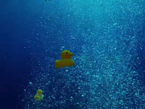 Blue Planet 2 producers admit to planting rubber ducks in the sea