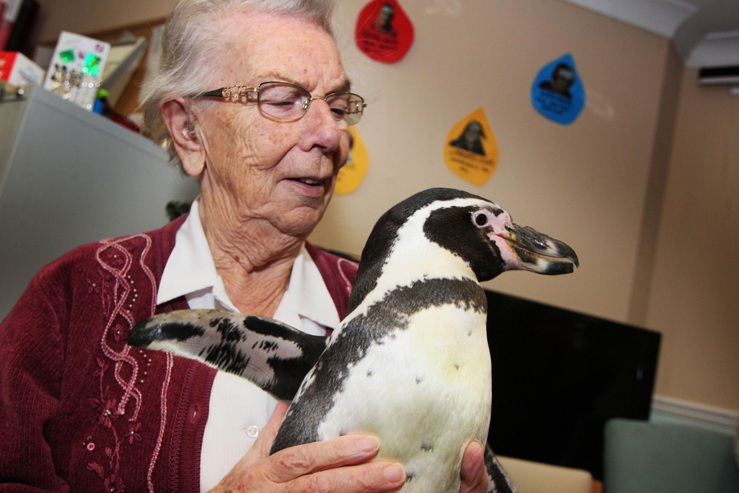 Pringle and Charlie the penguins visit a care home to cuddle elderly residents
