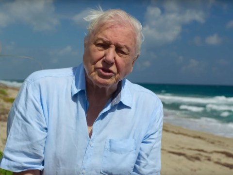 Sir David Attenborough's stirring rally call on Blue Planet 2 makes viewers think 'humans are the worst'