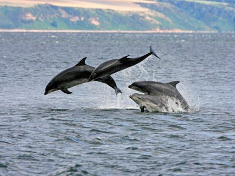 England's first resident dolphins have been discovered