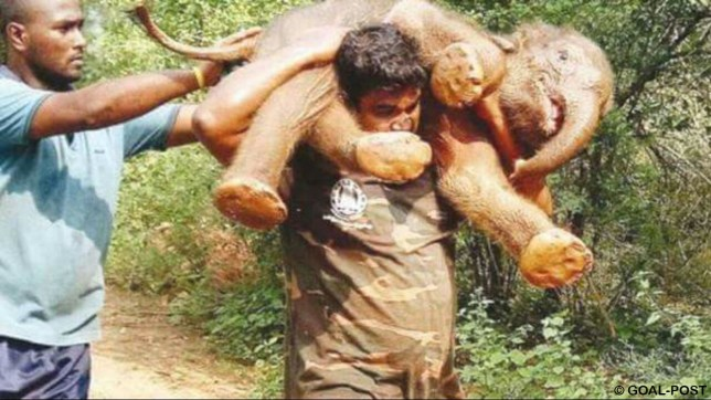Rescued elephant