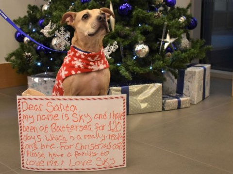 Britain's loneliest pets write letters to Santa