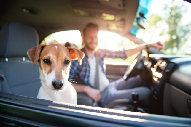 Cute dog looking through the car window.