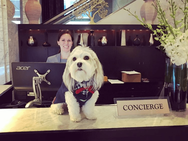 Buster the dog at Hotel Nikko, San Francisco