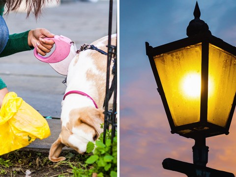 Street lamp powered by dog poo now lights up beauty spot