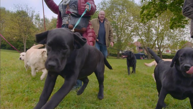Labradors are officially our favourite dogs