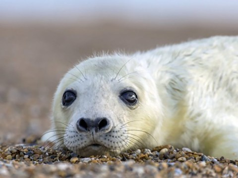 'Humans to blame' for four dead seal pups found huddled together on beach
